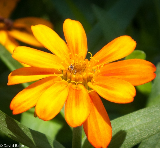 Yellow-Orange Blossom