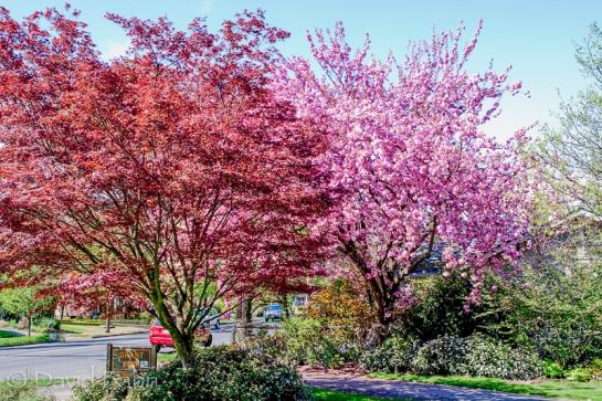 Portland_City_Park_Trees