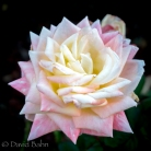 A flower by God, taken in Livermore, CA