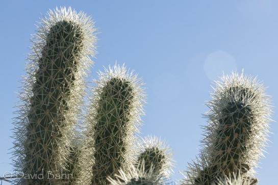 dlb-phoenix-desert-botanical-garden-04755