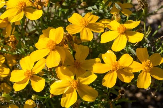 dlb-phoenix-desert-botanical-garden-04759