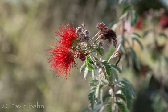 dlb-phoenix-desert-botanical-garden-04784