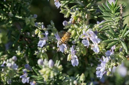 dlb-phoenix-desert-botanical-garden-04845