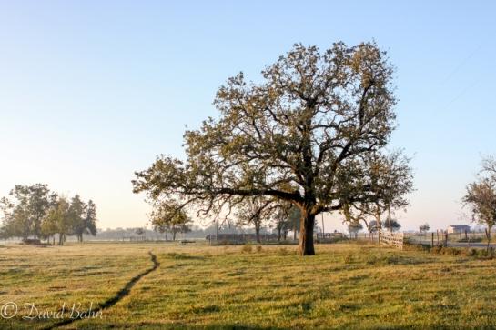 Tree Portfolio 2008-03